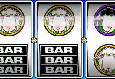 Bar Black Sheep
